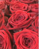 Red roses 60cm