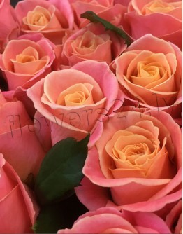 Light pink roses 60cm