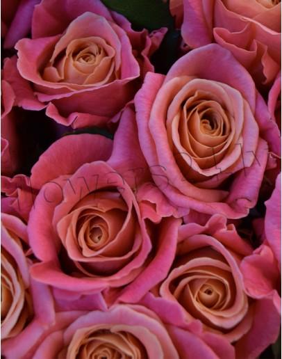 Light pink roses 70cm
