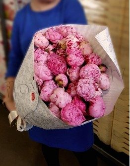 Peonia Special for You (29)